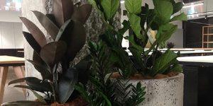 Long Term Artificial Plant Hire