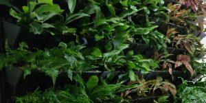 Long Term Green Wall Hire