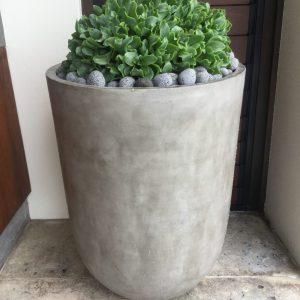 Full Sun Plants