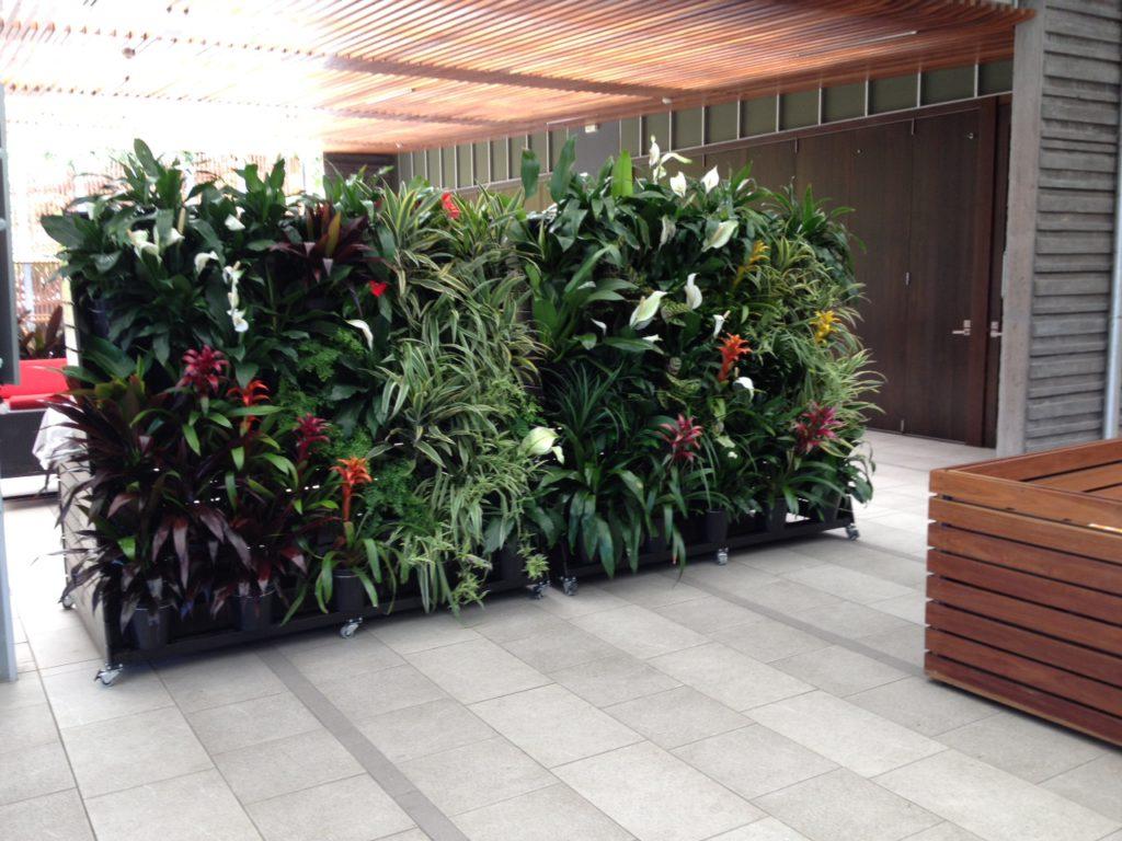 office plant hire sunshine coast - green design tewantin