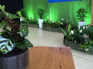 indoor plant hire sunshine coast - plant rentals noosa bli bli buderim mooloolaba cooroy tewantin