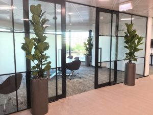 office plants sunshine coast - corporate plant hire