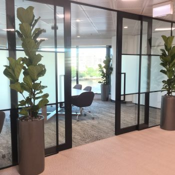 office plants sunshine coast - corporate plant hire