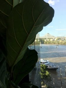 Corporate Office Plant Hire Buderim QLD - Indoor Plants Australia