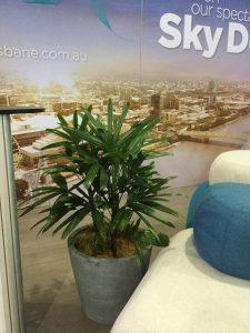 office plants hire coolum qld - corporate plants sunshine coast - rent plants for workplace australia