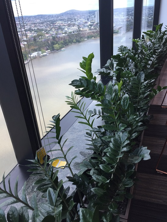 Indoor Plant Hire Bli Bli QLD