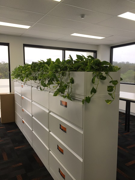 Office Plant Rental Cooroy QLD - Indoor Plants Hire Cooroy