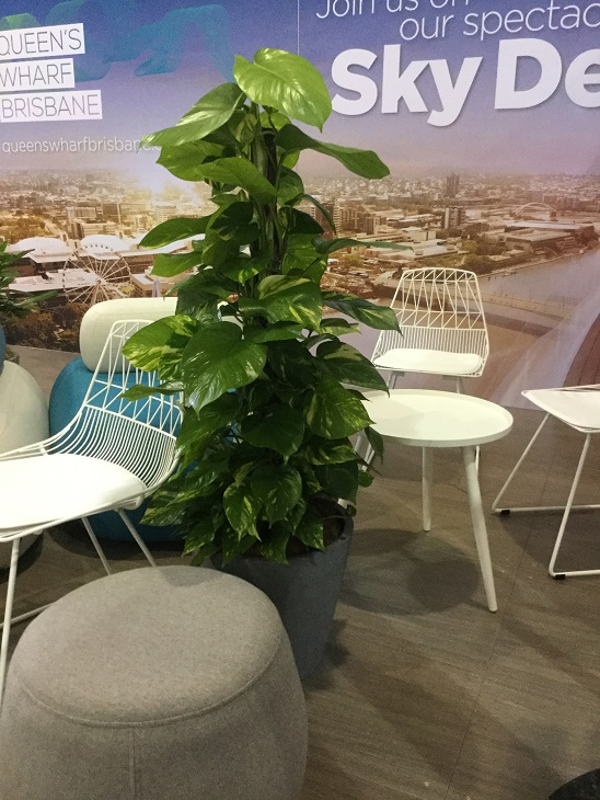 Office Plant hire Mooloolaba QLD Indoor plant rental