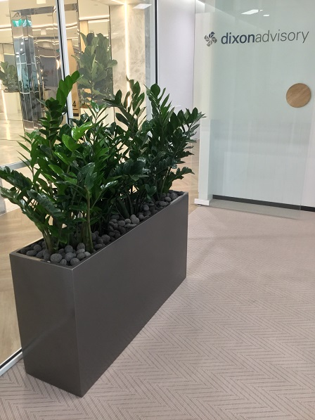 Office Plants Hire Tewantin QLD - Indoor Plants Australia