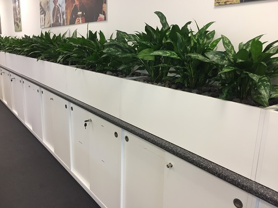 Plants for Hire Nambour QLD - Indoor Office Plants Rental